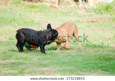 two dogs playing ball in the grass, panning camera, soft focus and blur  - stock photo