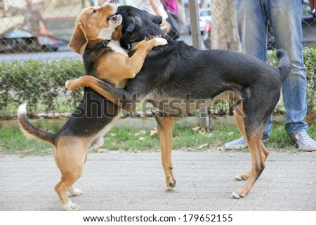 two dogs playing in park hugging each other - stock photo