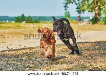 Two dogs playing in summer - stock photo