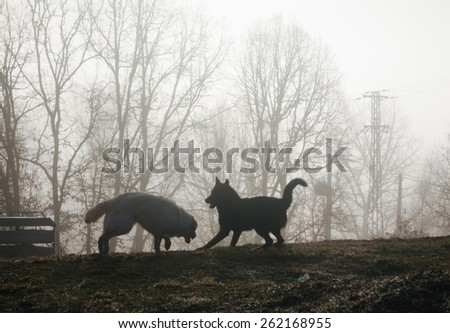 two dogs playing in the mist at sunrise - stock photo