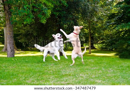 two dogs playing on a green grass outdoors - stock photo