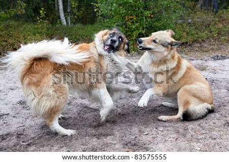 Two dogs playing on the nature of the fight - stock photo