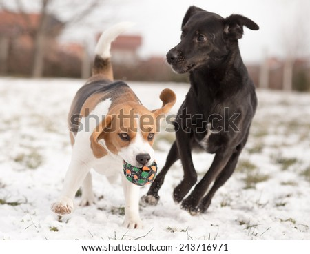 Two dogs playing with ball - stock photo