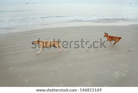 Two dogs running in beach, India - stock photo