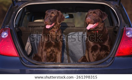 two dogs sitting in a car trunk - stock photo