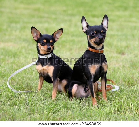 Two dogs sitting on the grass