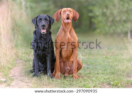 Two dogs sitting on the grass facing the camera. - stock photo