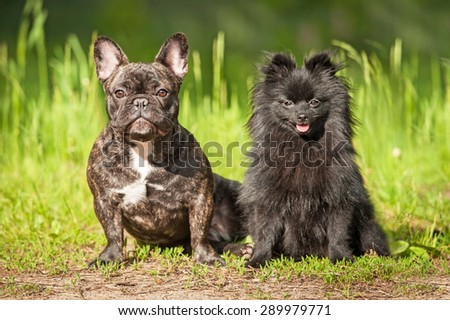 Two dogs sitting outdoors in summer - stock photo