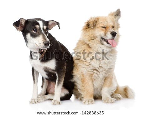 Two dogs sitting together. isolated on white background - stock photo
