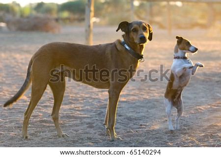 Two dogs standing in the sand - stock photo