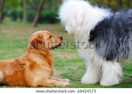 Two dogs staring at each other with curiosity - stock photo
