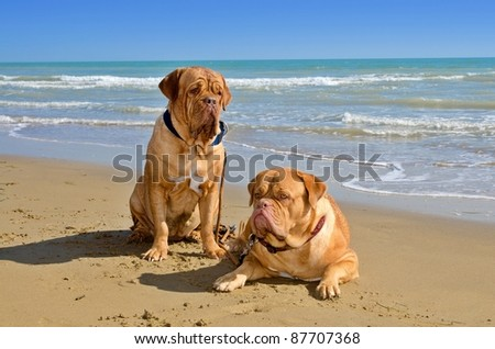 Two dogs the beach on summer day - stock photo