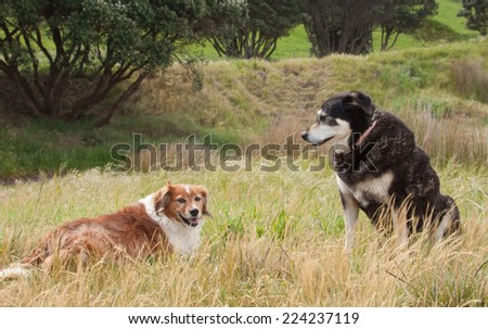 two dogs together in a grassy beach side field  - stock photo