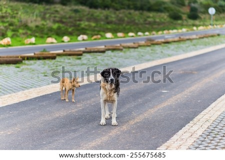 two dogs walking together side by side on a street - stock photo
