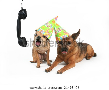 two dogs with birthday hats on their heads