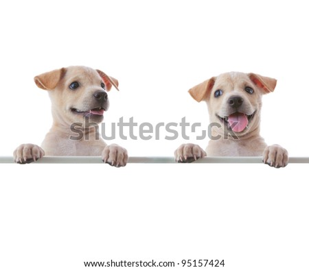 Two dogs with empty board on white background - stock photo