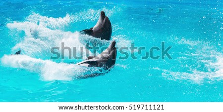 two dolphins frolic in the blue clear water, selective focus