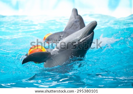 Two dolphins in the pool playing with balls