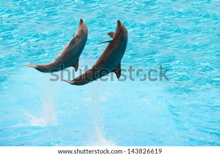 Two dolphins jumping in the pool - stock photo