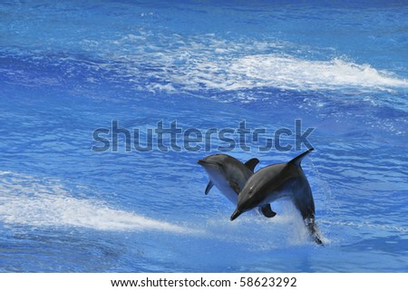 Two Dolphins jumping out of the water