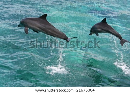 Two dolphins leaping out of the water together - stock photo