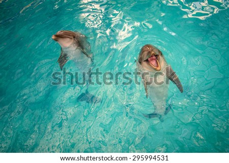 Two dolphins playing in the pool with seawater, one of them seems to be smiling - stock photo