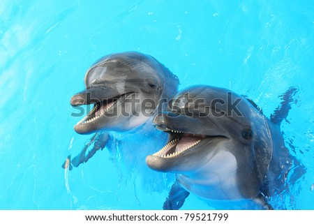 Two dolphins swim in the pool - stock photo
