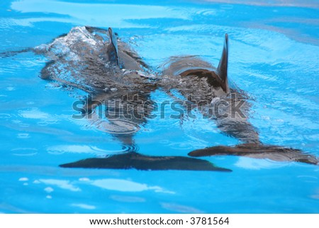 two dolphins swimming - stock photo