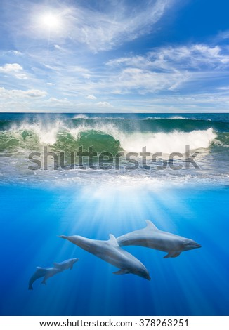 two dolphins underwater - stock photo
