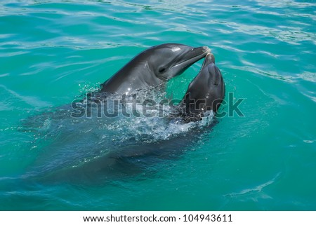 Two dolphins which is in love playing around in the ocean. - stock photo
