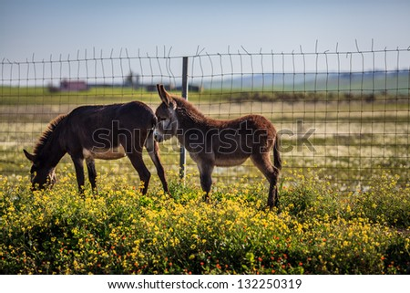 Two donkeys feeding on grass - stock photo