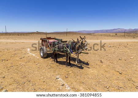 Two donkeys with the old carriage in a dry, desert looking area. Old, traditional way of transport.