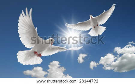 two doves flying with spread wings on sky - stock photo
