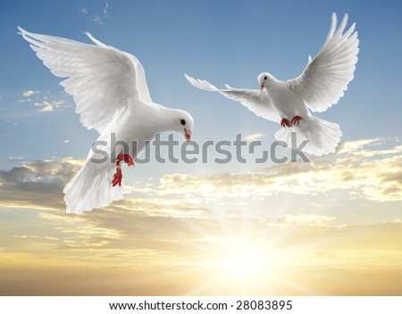 two doves looking down while flying on sky - stock photo