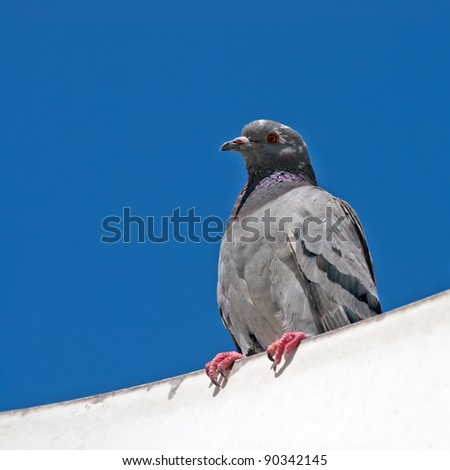 two doves on the background of blue sky - stock photo