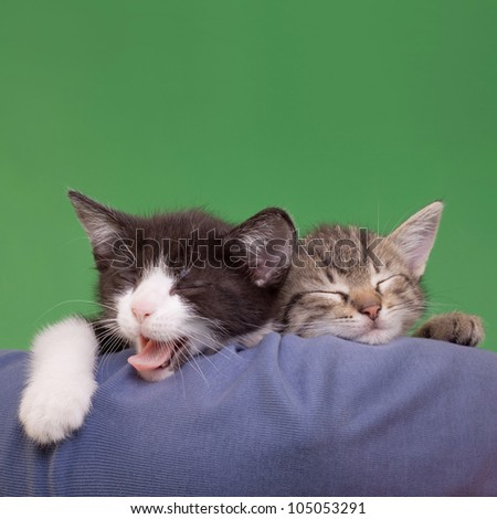Two Dreamy Cats Domestic Cats Isolated on Green Background - stock photo
