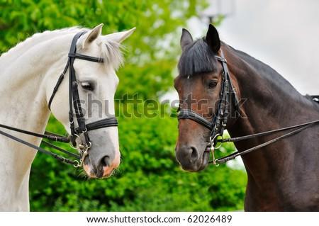 Two dressage horses - stock photo