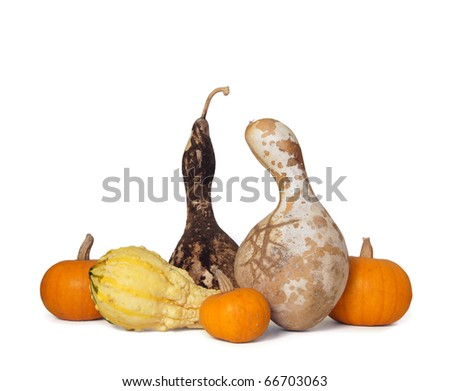 Two dried gourds, three mini pumpkins and a yellow squash on white and with clipping path - stock photo