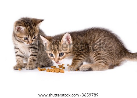 two eating kittens - stock photo