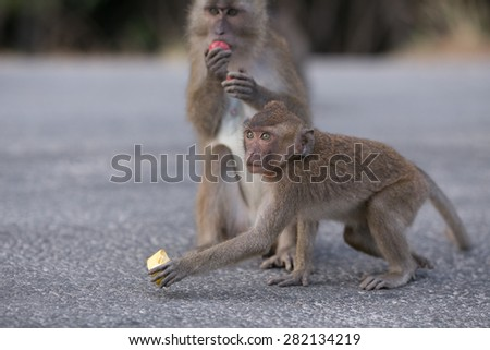 Two eating monkeys