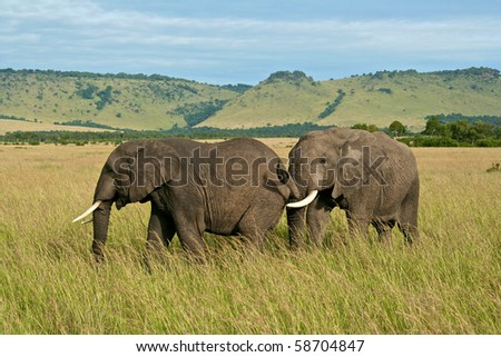Two elephants in the Masai Mare, Kenya