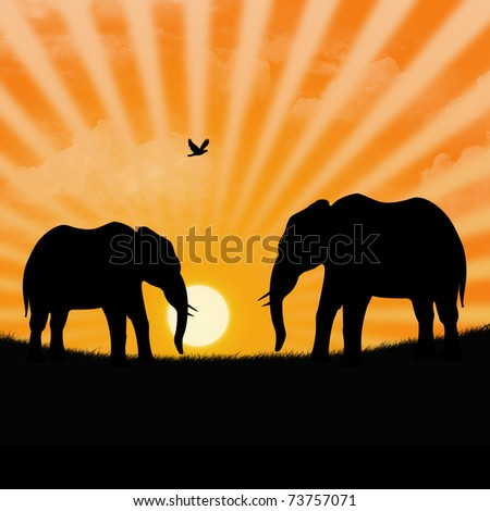 two elephants in the savannah during the sunset