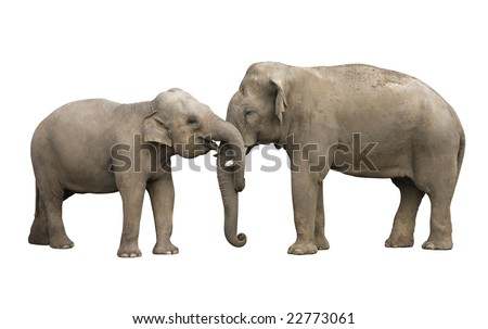 Two elephants isolated with a clipping path using pen tool. Very easy to put over any background you like. - stock photo