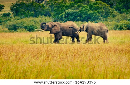Two elephants, Kenya - stock photo