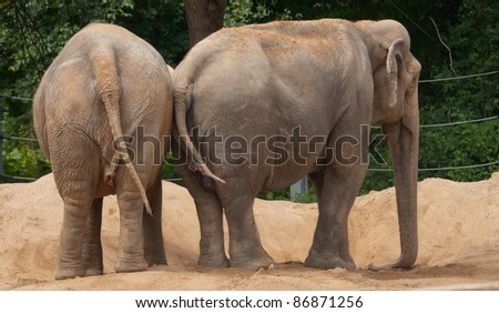 two elephants taking a sand-bath