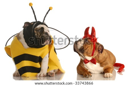 two english bulldogs dressed up as a bee and devil - stock photo