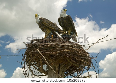 eagle nest online dating Bald eagle nest-site selection and nesting habitat in maryland journal of wildlife   naturalist 16:3, 343-361 online publication date: 22-sep-2017.