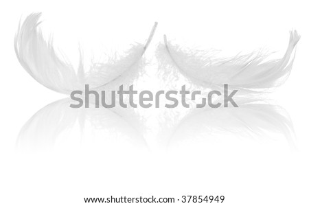 two feather and its reflection isolated on black background - stock photo
