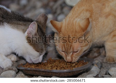 Two Feral Cats Eating at a Feeding Station Setup for Them. - stock photo