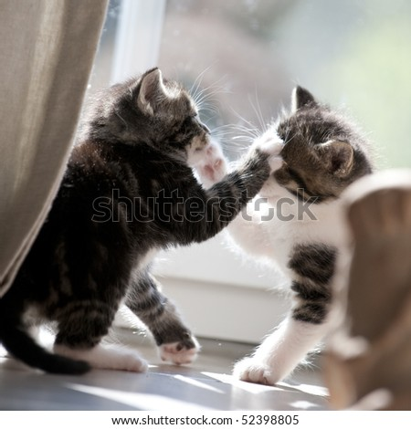 two fighting young cats - stock photo